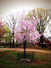 Photo: Small Blossom @ Central Park