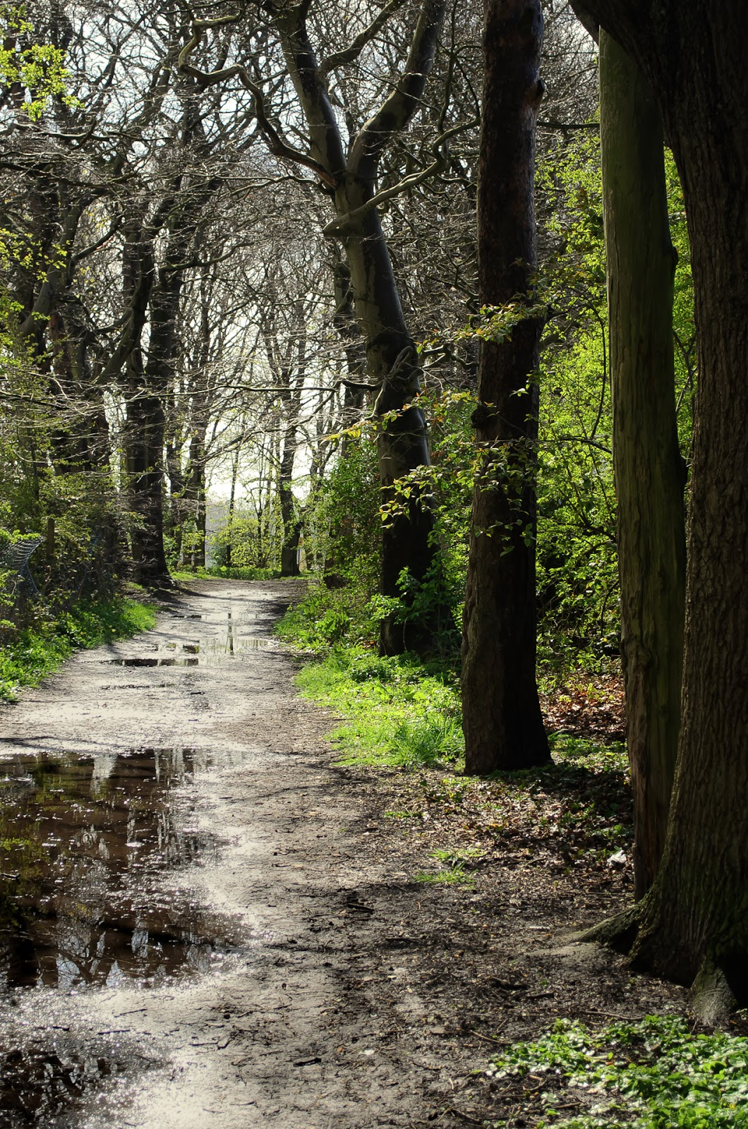 the-forest-after-rain.jpg