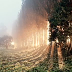 by Charles Brooks - Landscapes Forests