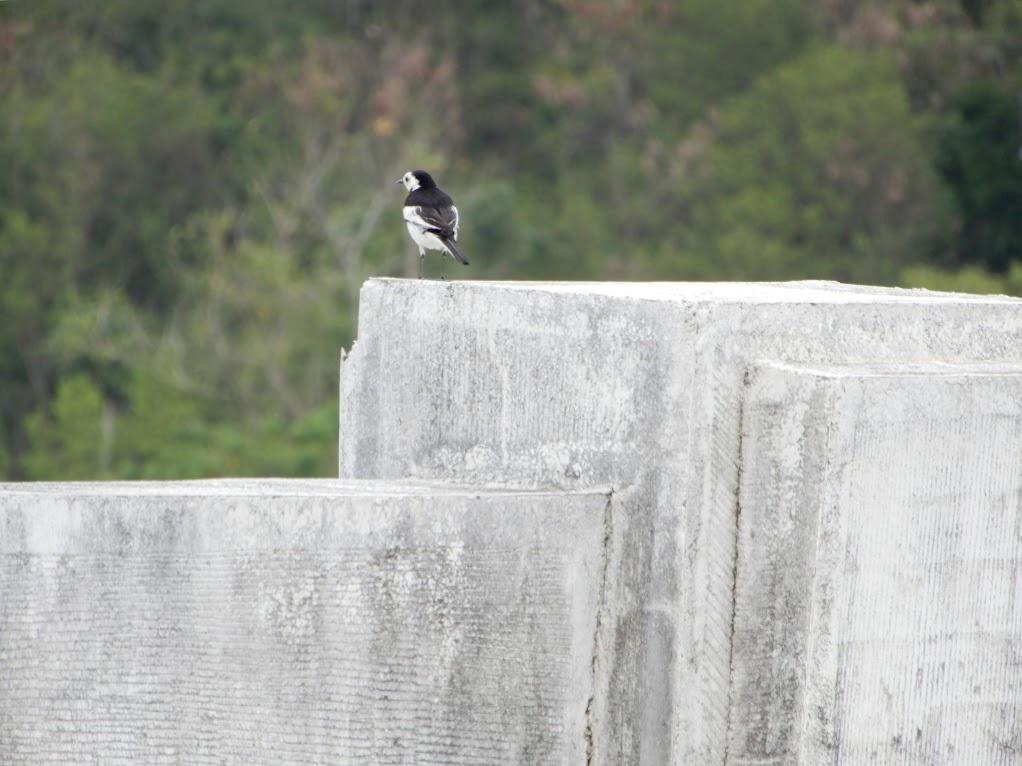 ダムを見下ろす小鳥