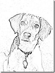 dogbw