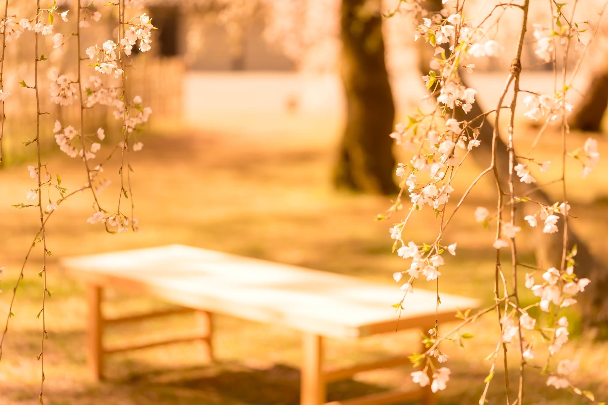 Kyoto gyoen Konoe Mansion site cherry blossoms4