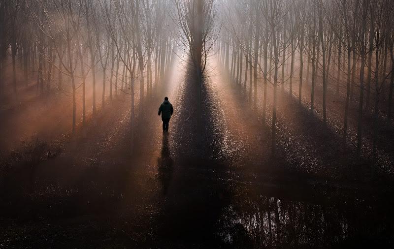 selva oscura... di Claudiomantova