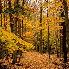 Blue Hill way by Harish Kumar K - Nature Up Close Trees & Bushes ( fall. blue, reservation, fill, way )