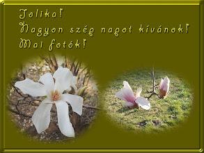Photo: Köszöntés virággal