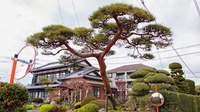 Photo: Traditional Japanese homestead with carefully kept pine tree out front, Ōizumi, Ōra District, Gunma Prefecture. Read more about Oizumi: http://japanvisitor.blogspot.jp/2015/04/oizumibrazil-in-japan.html