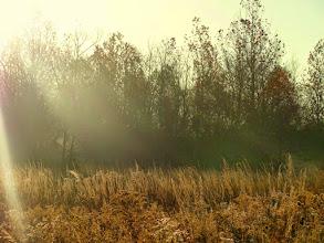 Photo: Autumn sunrise on a golden field at Eastwood Park in Dayton, Ohio.