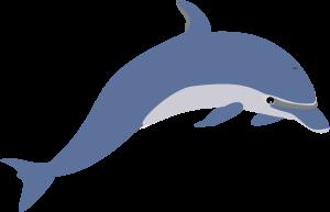 Description: Another dolphin