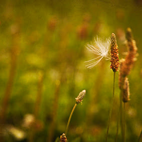 Make a Wish by Aimee Hultzapple - Nature Up Close Leaves & Grasses