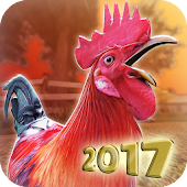 Wild Rooster Run