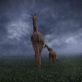 mom, is there a storm coming? by George Leontaras - Digital Art Animals ( sky, rain, storm, volos, yellow, clouds, brown, red, leontaras, greece, blue, hellas, grass, giraffe, glart. kid, photography )