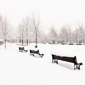 Parc hiver by Jocelyne Maucotel - Uncategorized All Uncategorized ( montreal, hiver, rue, ville, neige )