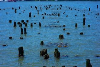 Photo: Stumps