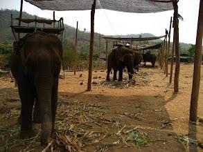 Photo: Our elephant band