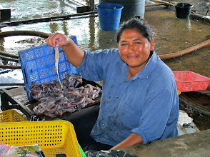"Photo: squid-cleaning operation at ""Squidville"" (Pranburi Marina)"