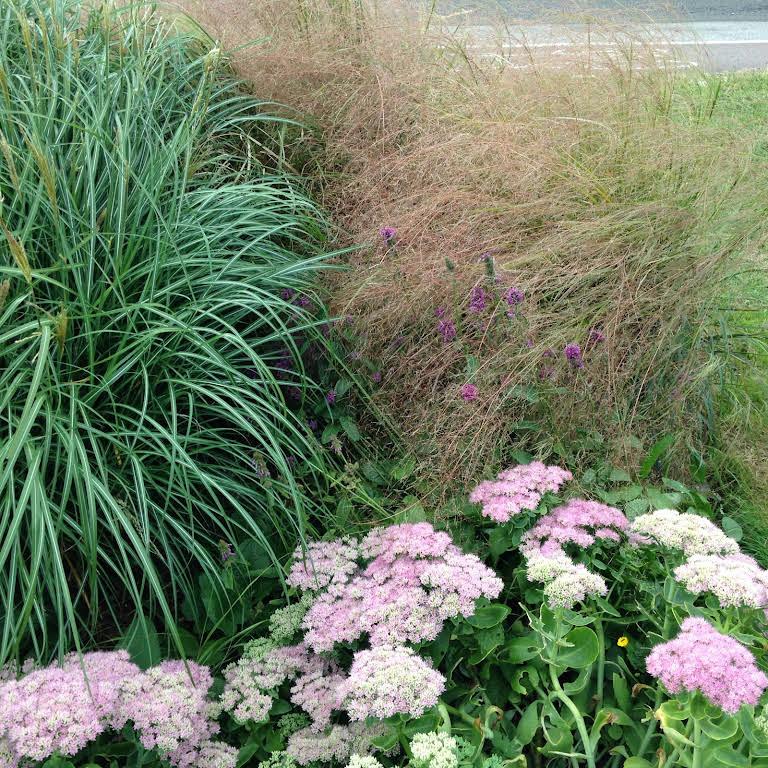 The Garden Design Shop, Landscape design and suppliers of ...