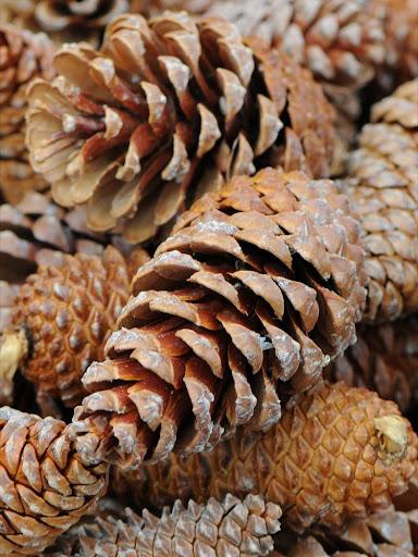 Pine Cones Wallpapers - HD