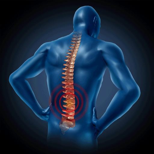 Lower Back Medical Workout