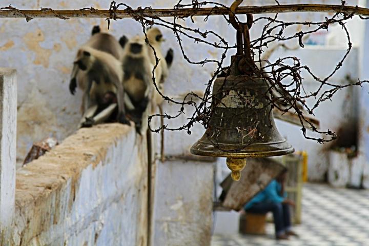 Per chi suona la campana? di David Marrone