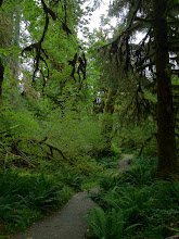 Photo: Hoh rain forest
