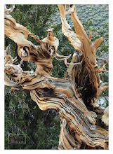 Photo: Eastern Sierras-20120715-299