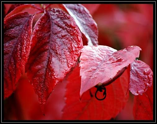 Red Passion di hylablu