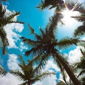 Sunshine by Shashank Ramesh - Nature Up Close Trees & Bushes
