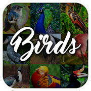 Bird Encyclopedia