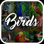 Bird Encyclopedia 1.1