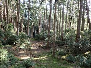 右から林道からの道と合流