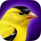 iBird Yard Plus Guide to Birds