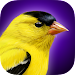 iBird Yard Plus Guide to Birds Icon