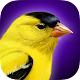 iBird Yard Plus Guide to Birds (app)