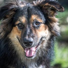 Dog 1 by Darren Sutherland - Animals - Dogs Portraits ( jango, dog )