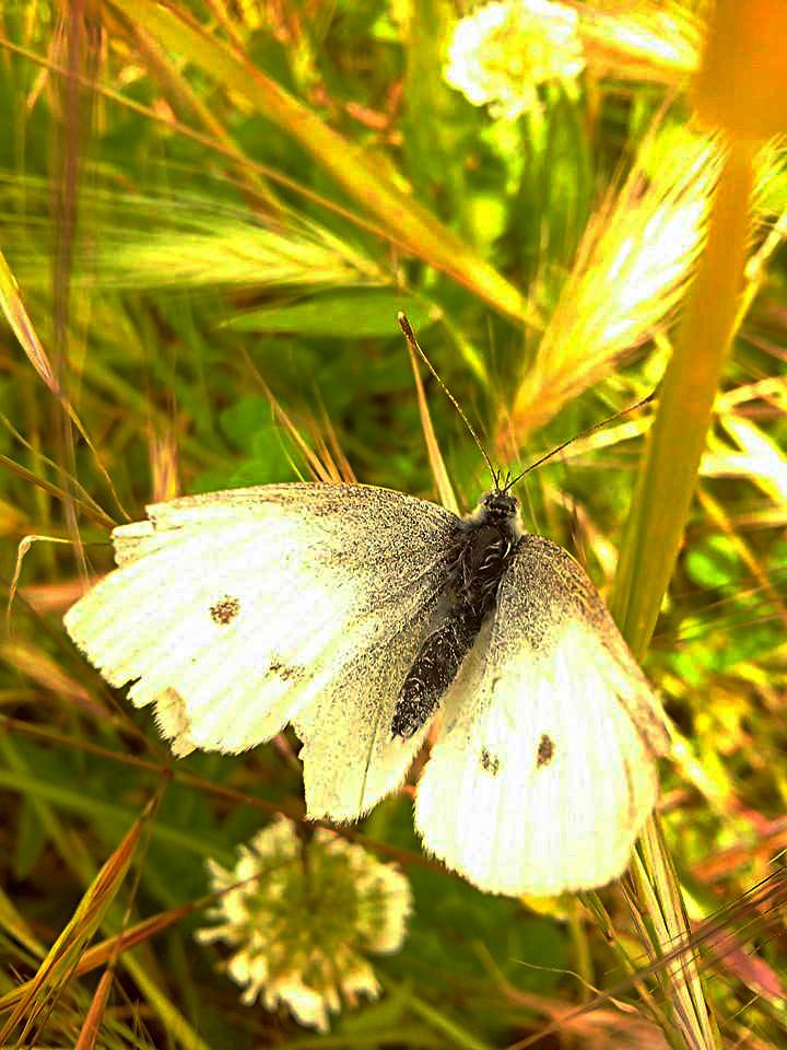 (Spring)Fly  di B.dina
