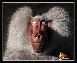 Photo: Bitte, bitte ein wenig mehr Sonne in der Mittagspause  #Portrait photography: #Primates & #Hominidae  my galery: goo.gl/B1OsX8