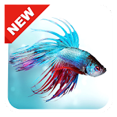 300+ Betta Fish Live Wallpaper HD