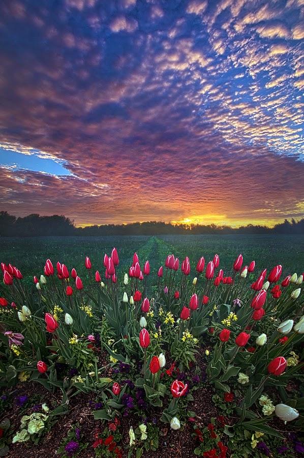 Beyond All Else by Phil Koch - Flowers Flower Gardens ( love, trending, wisconsin, sunrise, shadow, rural, dramatic, endless, hope, fineart, sun, canon, beautiful, unity, horizon, sunlight, pastel, joy, light, peace, earth, shadows, popular, arts )