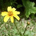 Tick Seed