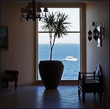 """Photo: Отель """"Шератон"""", пальмы возле лифта"""