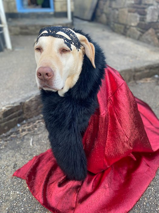 Perro labrador con disfraz de can can