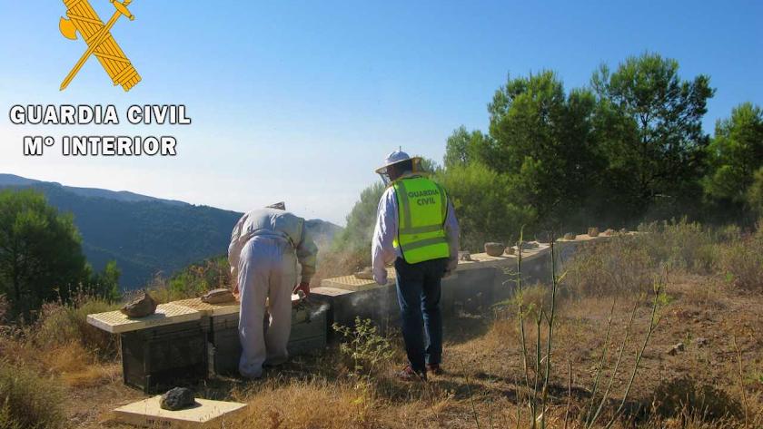 La Guardia Civil inspecciona algunas de las colmenas.