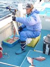 Photo: イノウエさんは真鯛トリプルキャッチ!