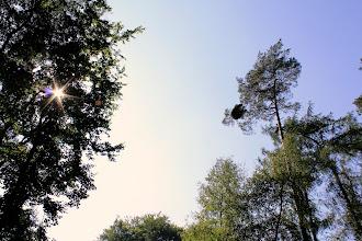 Photo: Die Bäume ragen in den spätsommerlichen blauen Himmel, am Ostufer des Großensees