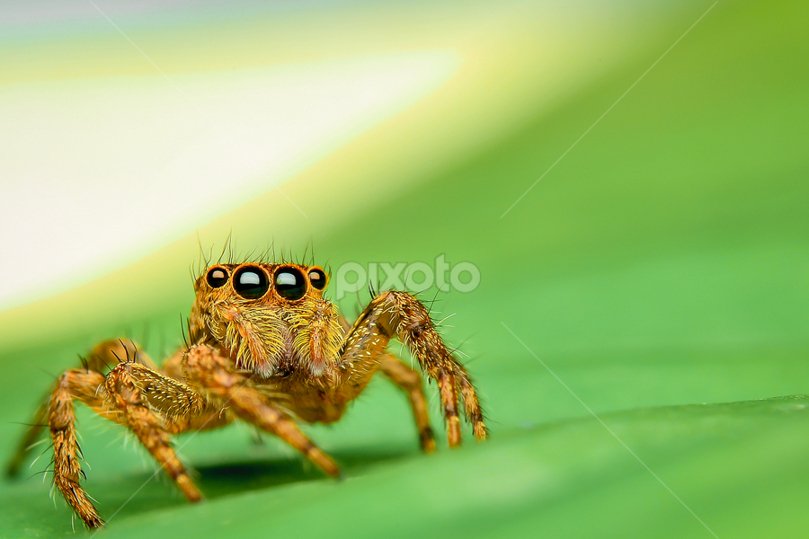 Just wondering around  by Dave Lerio - Animals Insects & Spiders (  )
