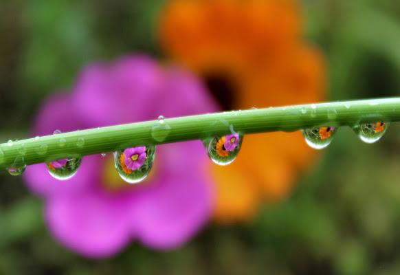 Pioggia tra i fiori. di yuna57