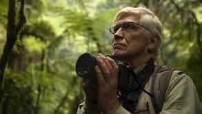 Primates: Protecting Primates thumbnail