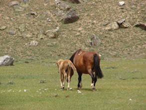Photo: Moti's horse and its foal.