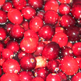 Cranberry Sweetness by Jason Asselin - Food & Drink Fruits & Vegetables ( cranberry, fruit, red, eat, shiny, food, hungry, nomnom, yummy, foodie, cook, family, cooking, groceries, breakfast, lunch, dinner, dessert, tasty )