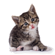 Moody cat sounds APK